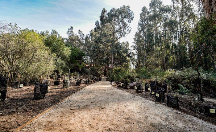 barrio foresta reñaca